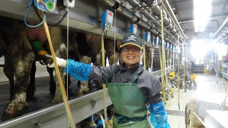 Los chinos están usando sistemas israelíes para organizar su industria lechera. Foto cortesía deAfiMilk