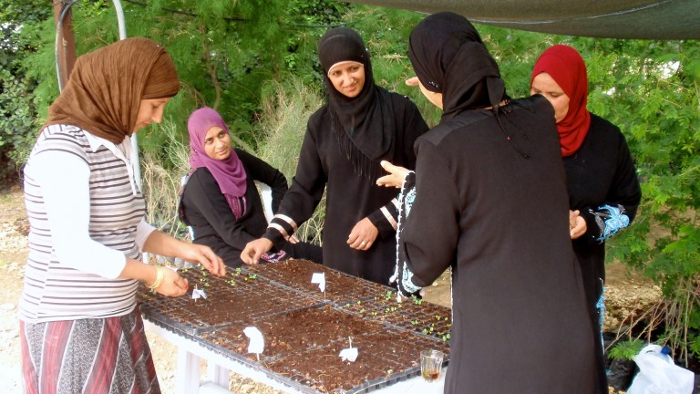 project-wadi-attir-indigenous-veg-initiative-768x432