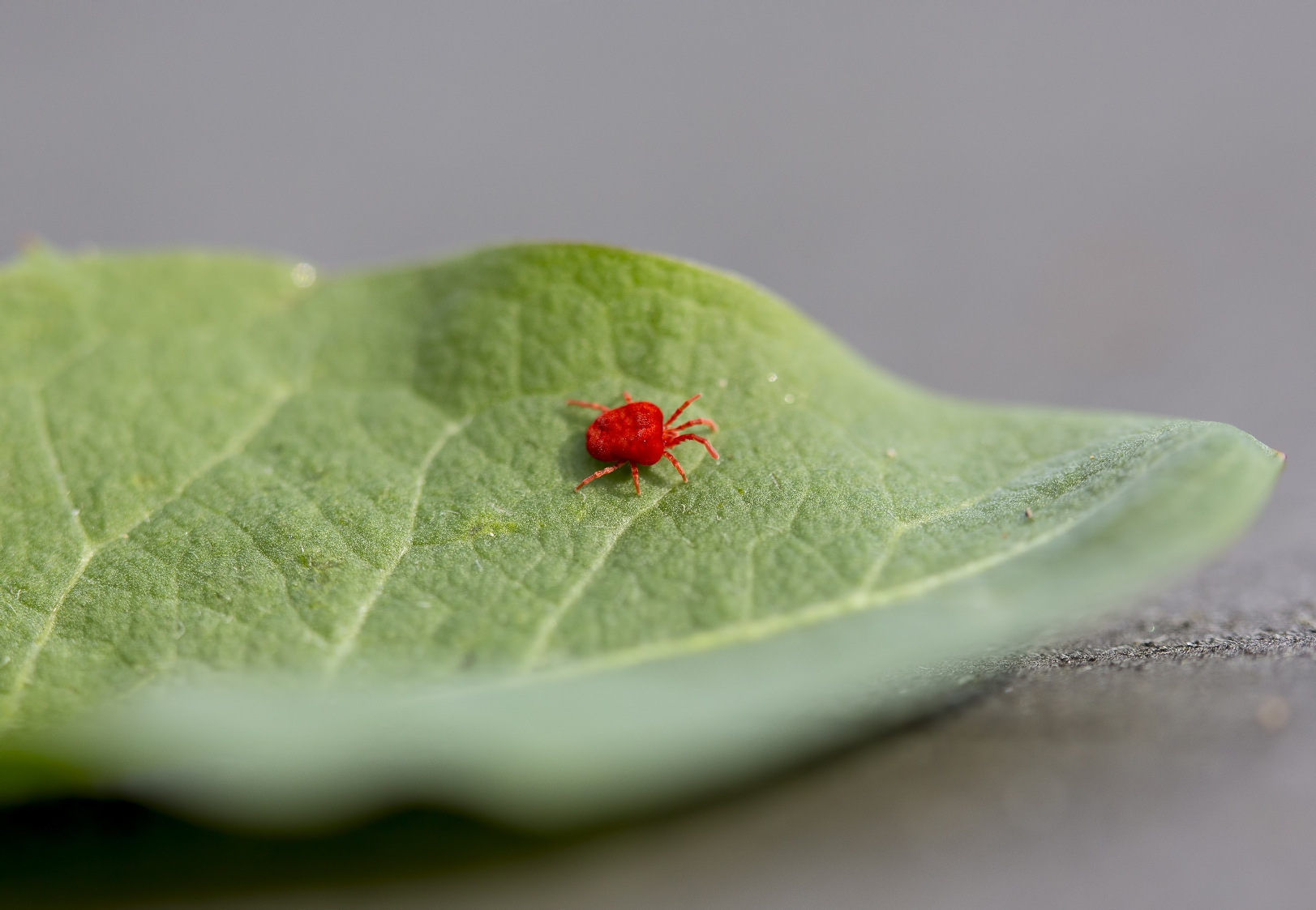 shutterstock_spider_for_biobee.jpg