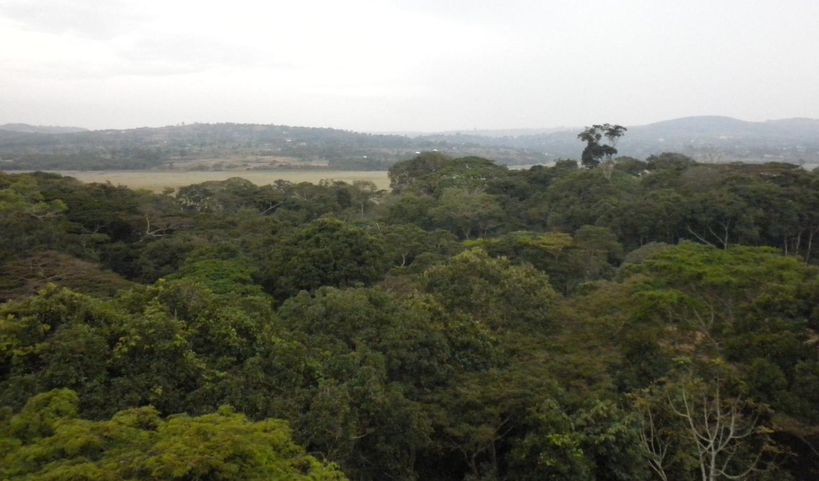 Panorámica del bosque Zika, en Uganda. Foto cortesía del doctor Leslie Lobel.