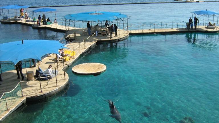 El Arrecife de los Delfines. Foto cortesía de www.goisrael.com.