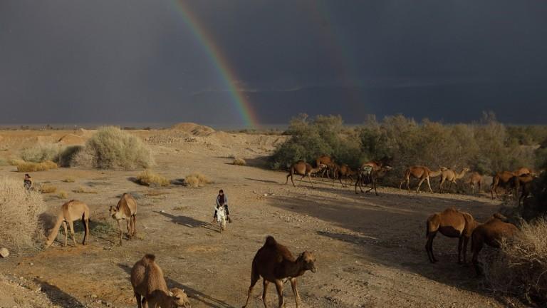 Los rayos del sol alargan las sombras de estos camellos en el Mar Muerto, escena que es enmarcada por un arco iris. Foto de Yaakov Naumi/FLASH90.