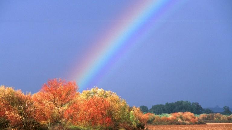 Los colores de los árboles de la reserva natural de Tel Dan, en el norte de Israel, contrastan con los del arco iris. Foto de Doron Horowitz/FLASH90.