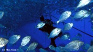 Los peces se crían en jaulas flexibles en el mar usando el sistema Subflex. Foto de Tal Flanzman.