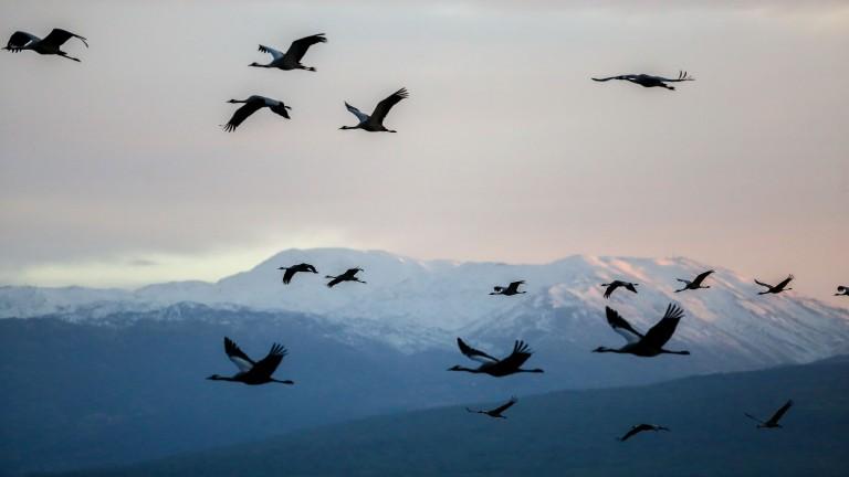 Miles de grullas hacen escala en la reserva del Valle de Hula en ruta hacia el norte de Europa. Foto de Edi Israel/FLASH90.