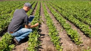 La plataforma es un sistema para tecnología agrícola y de información sobre métodos agrícolas óptimos. Foto vía Shutterstock.com.