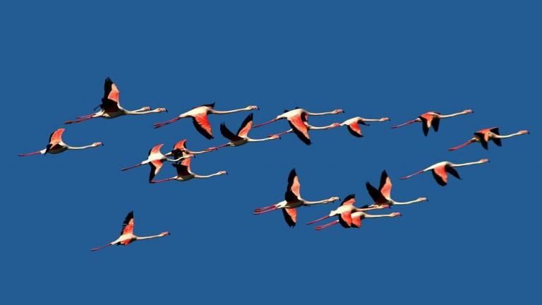 """""""Flamencos"""", por Elad Gonen."""