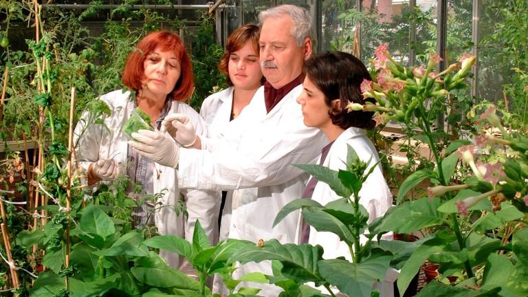El descubrimiento fortuito del profesor Shimon Gepstein, der., en un laboratorio resultó en un revolucionario avance en la agricultura. Foto cortesía.