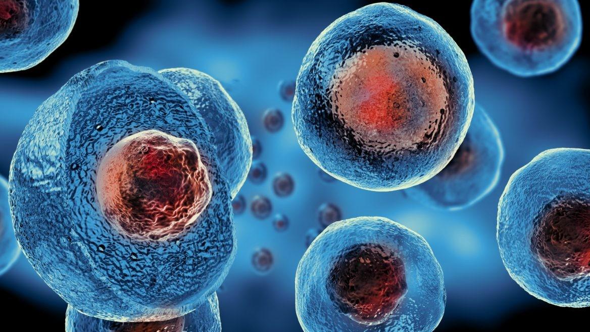 cura para las células madre de diabetes tipo 1