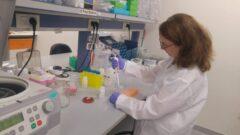 avance de células madre de diabetes tipo 1 avanza hacia la cura del cáncer