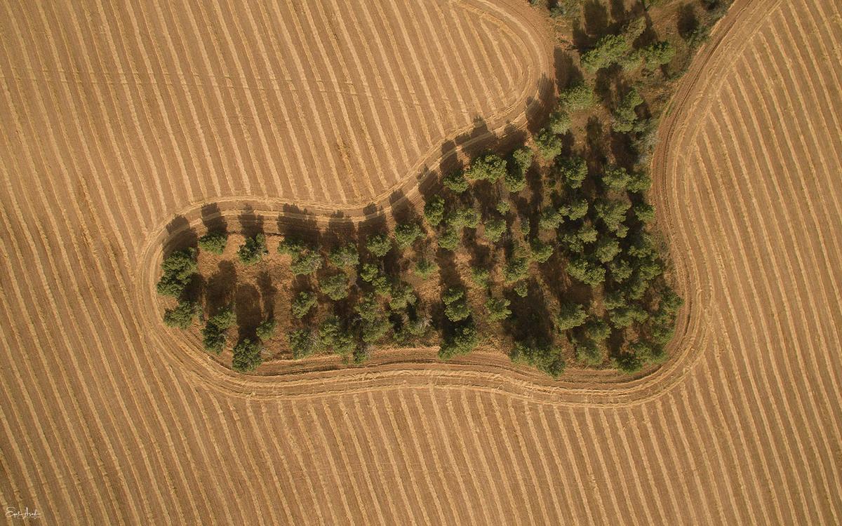 Los árboles se destacan sobre un fondo de cultivos en el kibutz Dorot en el sur de Israel. Foto: Eyal Asaf